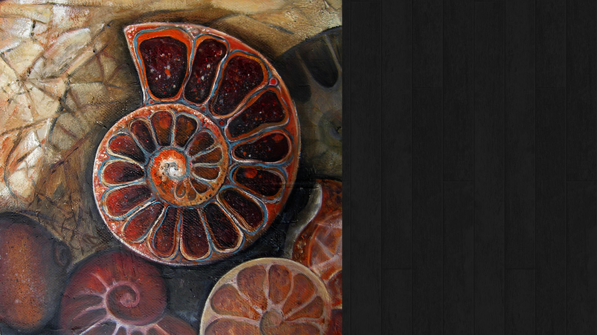 Ammonite Cross Section  © Jo Sheppard